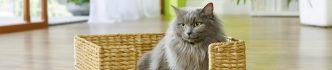 Que ce soit dans votre animalerie Montpellier ou Toulouse, conseils et articles de qualité